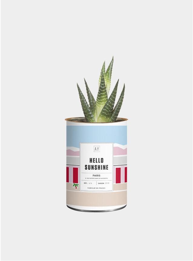 Hello Sunshine Greasy Plant