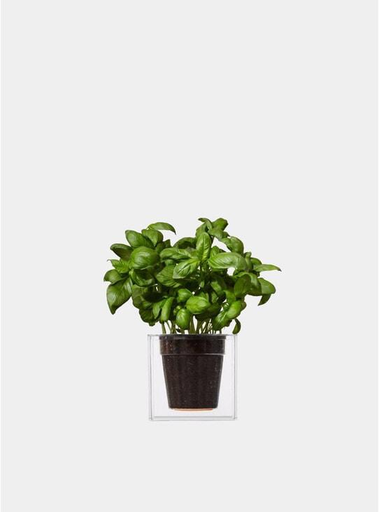 Large Transparent Cube Plant Pot