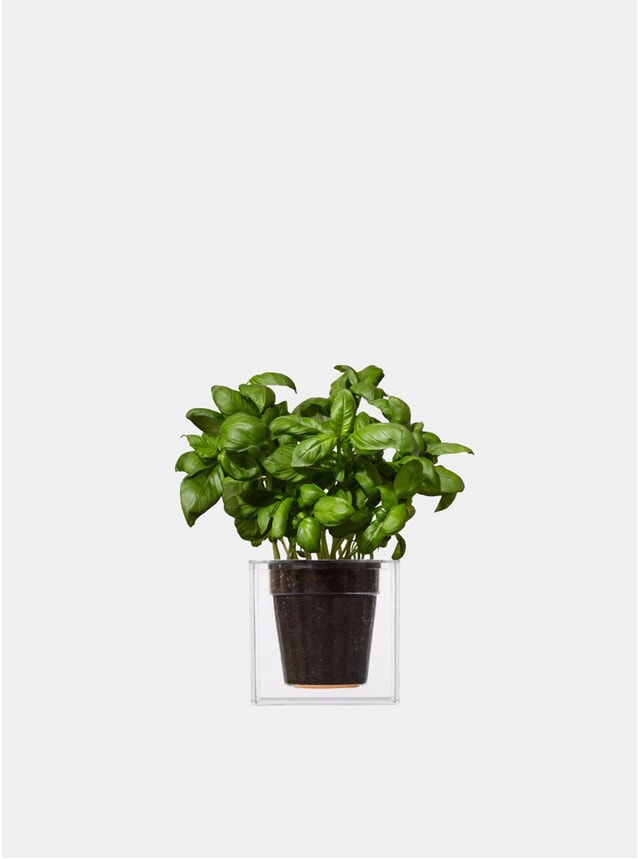 Large Transparent Cube Plant Pot