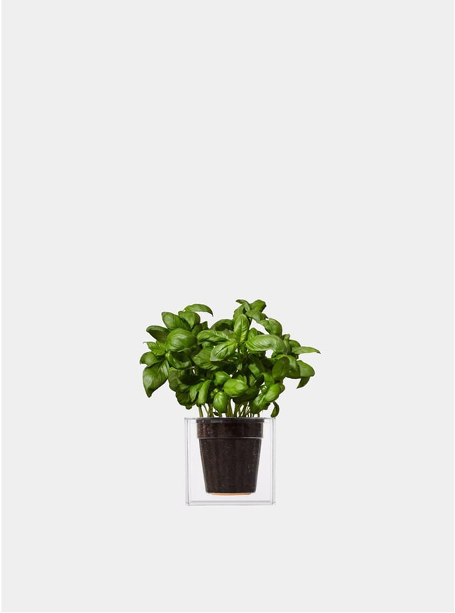 Small Transparent Cube Plant Pot