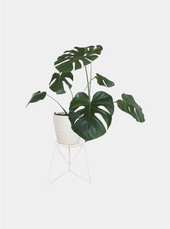 White Bona Plant Stand