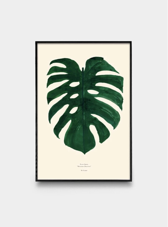Beige Monstera Deliciosa