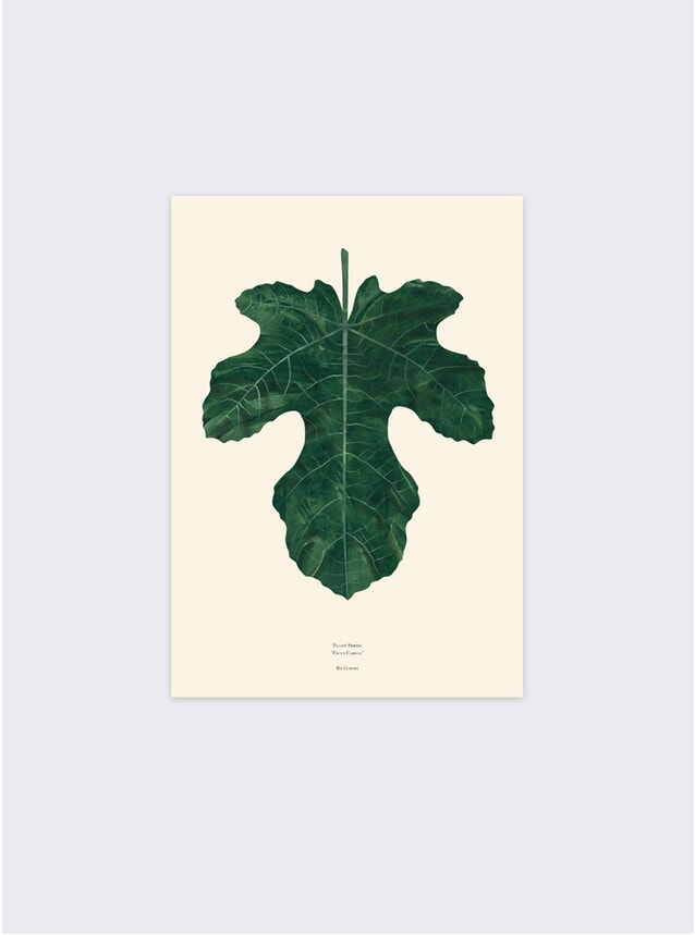 Ficus Carica Fig Leaf