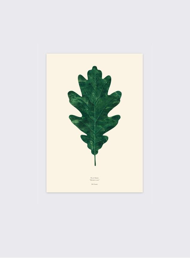 Quercus Alba Oak Leaf