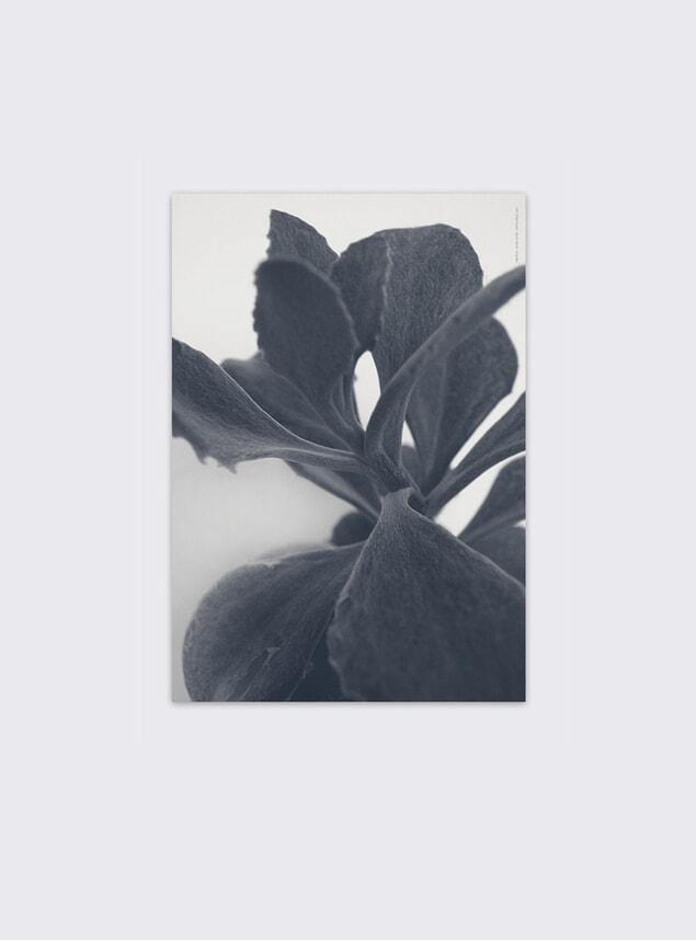 Succulent Plant No 2