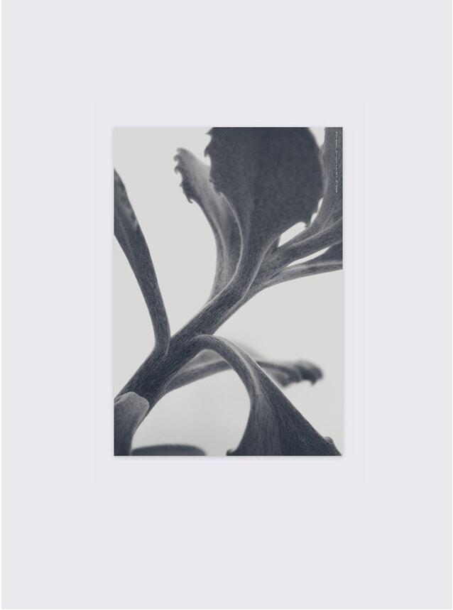 Succulent Plant No 3