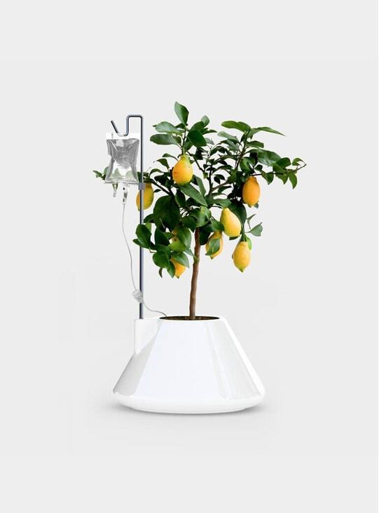 White I.V Plant Pot