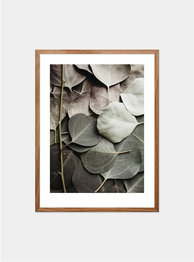 Eucaplyptus No.1