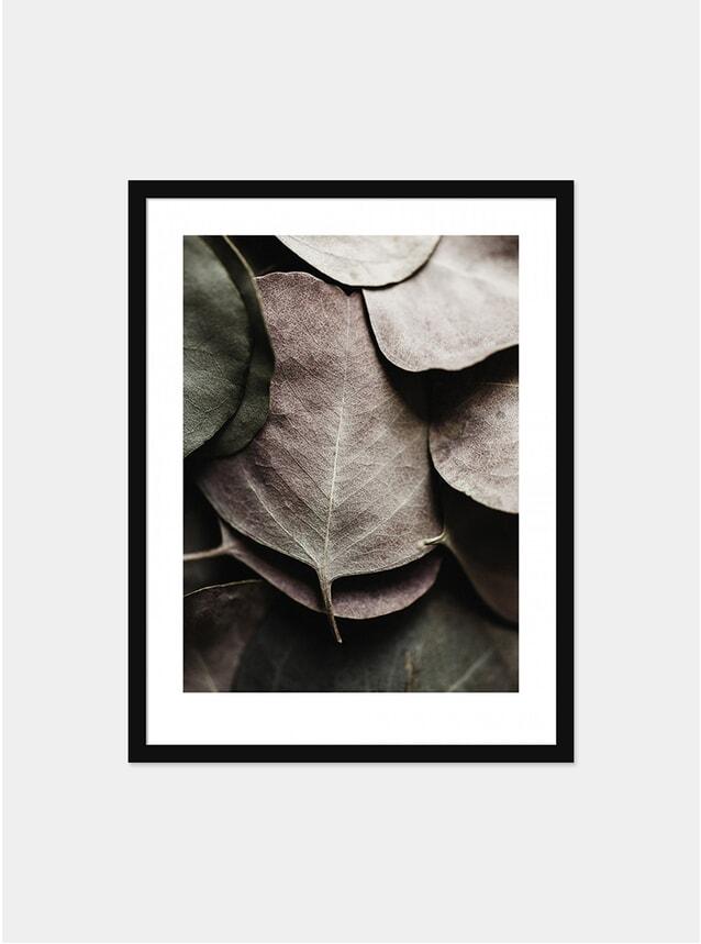 Eucaplyptus No.3