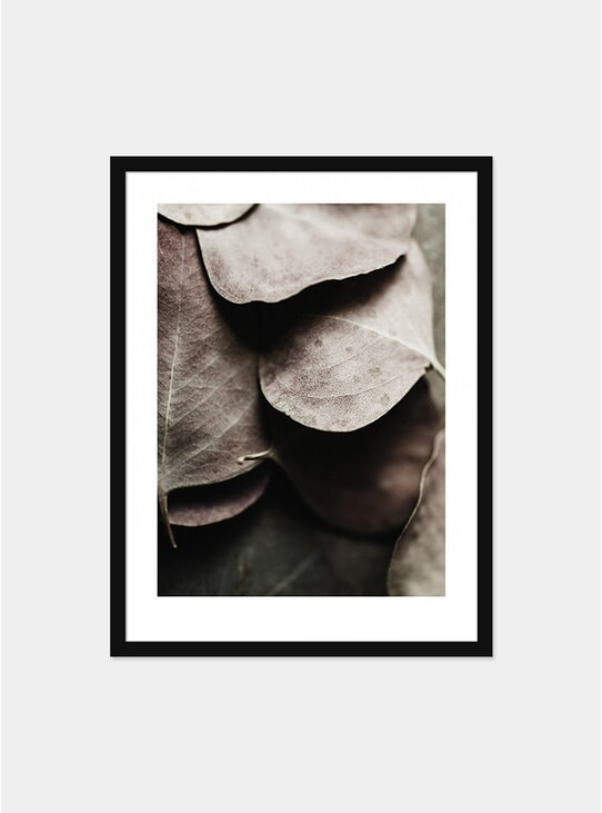Eucaplyptus No.2