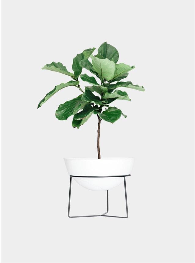 Everything Planter