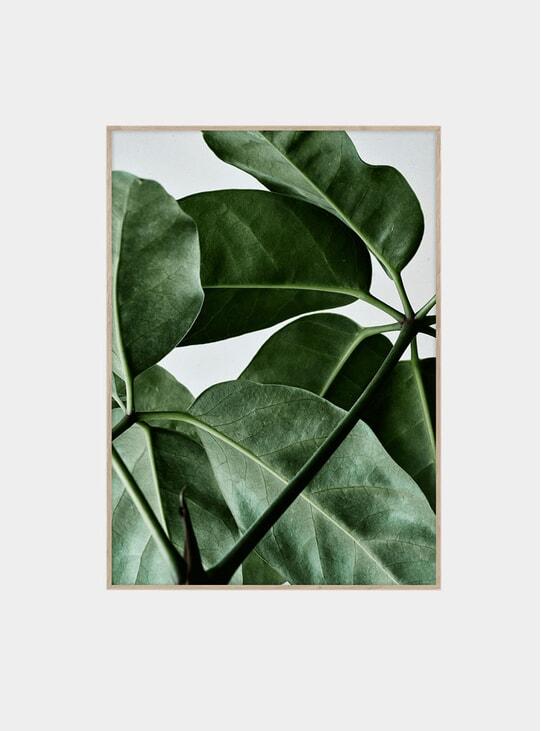 Green Home 01 Print by Kantinkoski