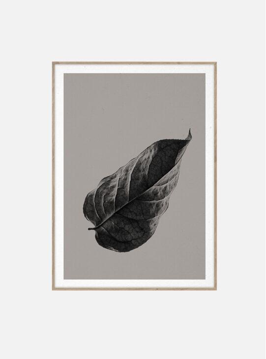 Sabi Leaf 01 Print by Norm Architects