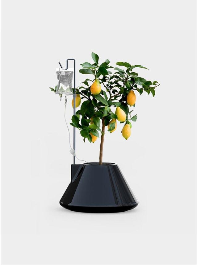 Black I.V Plant Pot