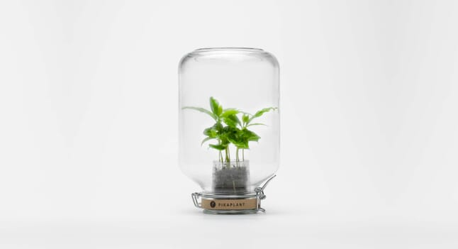 Pikaplant: The House Plants That You Never Need To Water
