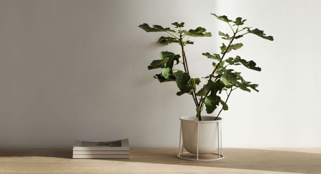 Minimal Plant Pots To Liven Up Your Home